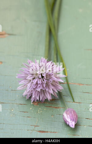 Chives with blossom, close-up, - Stock Photo