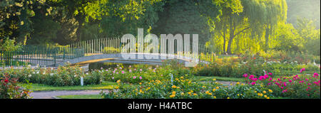Rose patches, Doblhoffpark, Baden near Vienna, Lower Austria, Austria - Stock Photo