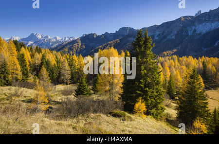 Cima Pape o Sanson, Valle di Valles, larches, Veneto, the Dolomites, Italy - Stock Photo