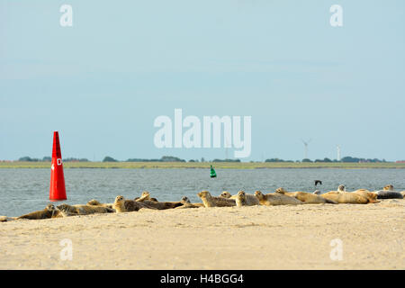 Seals on the Beach, Norderney, East Frisia Island, North Sea, Lower Saxony, Germany - Stock Photo