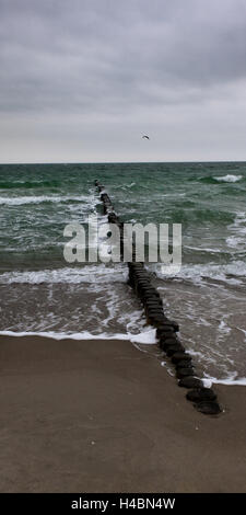Breakwater, the Baltic Sea, coast, bird, beach, surf, sand, waves, summers, Germany - Stock Photo