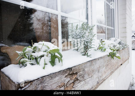Herbs in the snow - Stock Photo