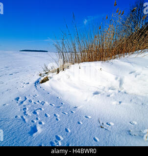Game tracks, animal tracks, many, fox tracks, roe deer, wild boar, in the fresh snowfall, snow-covered landscape, - Stock Photo