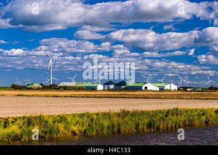GERMANY Schleswig-Holstein, Biogas plant at cow milk farm, maize ...