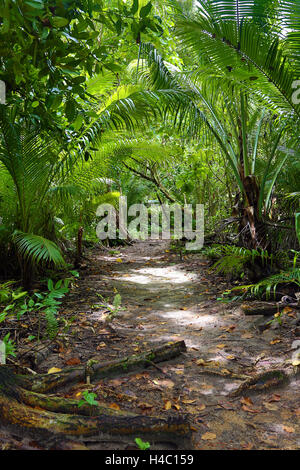 pacific ocean vs tropical rian forest Tropical rain forests tropical rainforests can be found in south and central america, africa, asia, australia, mexico, pacific caribbean, and in the indian ocean islands tropical rain forest vs the tundra.