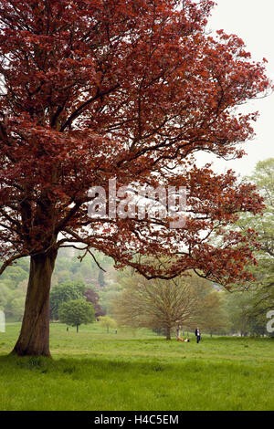 Great Britain, London, tree, grass, park, garden - Stock Photo