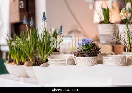 Flower arrangement with woodwork and dwarf's pansy in ceramics cups on a white tablet. In the background flowerpots - Stock Photo