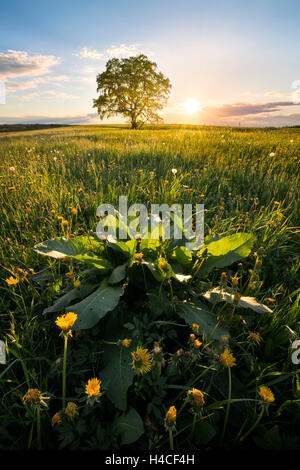 Germany, Bavaria, Augsburg county, rural, idyllic, Western Woods Nature Park, meadow, green, spring, sun, back light, - Stock Photo
