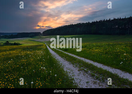 Germany, Bavaria, Augsburg, Western Woods Nature Park, country, rural, meadow, way, path, mood, storm, mystical, - Stock Photo