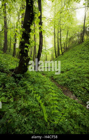 Germany, Bavaria, spring, Augsburg, Western Woods Nature Park, wood, beeches, beech forest, green, path, brook, - Stock Photo
