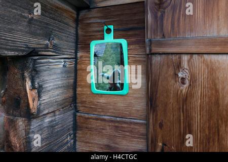 Europe, Switzerland, reflector in old mountain hut - Stock Photo