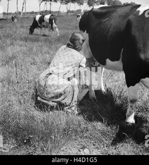 Ein Mdchen beim Melken der Khe im Umland von Bremen, Deutschland 1930er Jahre. A girl milking a cow at the rural - Stock Photo