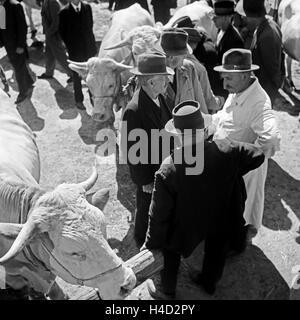Bauern handeln auf dem Viehmarkt den optimalen Preis aus, Deutschland 1930er Jahre. Farmers negotiating the best - Stock Photo