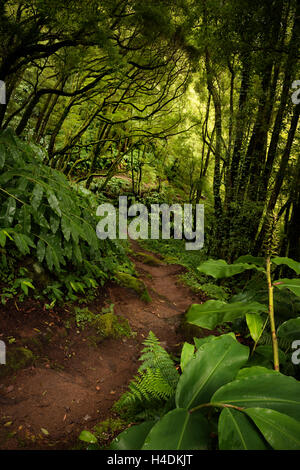 Path through the jungle on Sao Miguel, the Azores, Portugal - Stock Photo