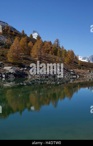 Green lake with Matterhorn, autumnal, trees, Cerium-weakly, Switzerland - Stock Photo