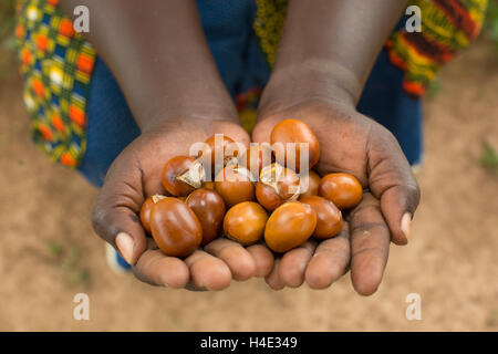Shea nuts are used for making shea butter and oil in Burkina Faso, West Africa. - Stock Photo