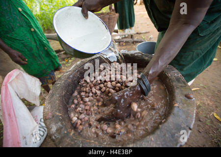 Shea nuts are washed at a fair trade shea butter production facility in Réo, Burkina Faso, West Africa. - Stock Photo