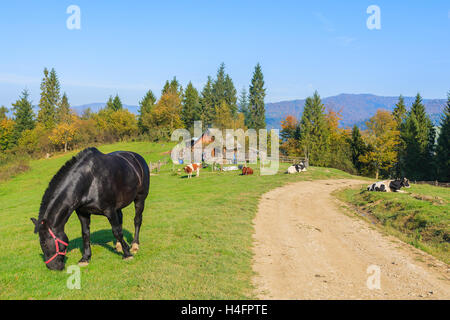 Black horse grazing on green field along a rural road in Pieniny Mountains, Poland - Stock Photo