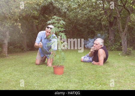 Two seniors smoking marijuana joint and relaxing next to the Cannabis plant outdoors in the garden. - Stock Photo