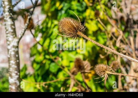 Seed head in the wild. - Stock Photo
