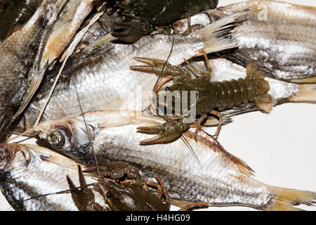Dry fish and alive crayfish on white background. Dead dry salty fish and alive river crayfish - snack to beer. Closeup. - Stock Photo