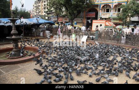 The image of Kabutarkhana ta dadar, Mumbai, maharashtra, India - Stock Photo