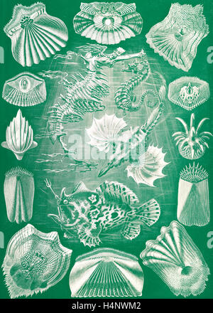Illustration shows fish. Teleostei. - Knochenfische, 1 print : color photomechanical ; sheet 36 x 26 cm., 1904. - Stock Photo