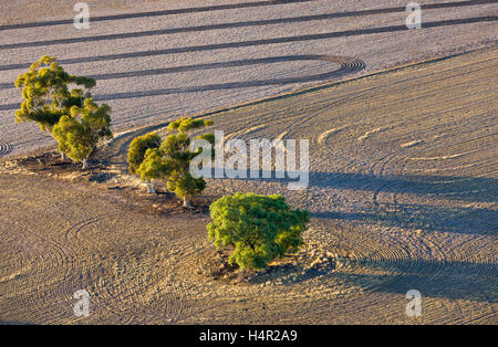 Low altitude aerial photo of trees growing in dryland farming area. - Stock Photo
