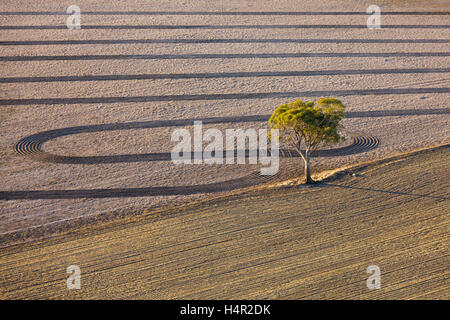 Low altitude aerial of farm land and lone Gum Tree in field near Natimuk, Western Victoria, Australia. - Stock Photo
