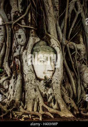 Buddha Head statue embed in tree roots. Ancient sandstone sculpture at Wat Mahathat. Ayutthaya, Thailand. - Stock Photo