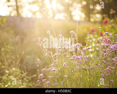 backlit spring flowers - Stock Photo