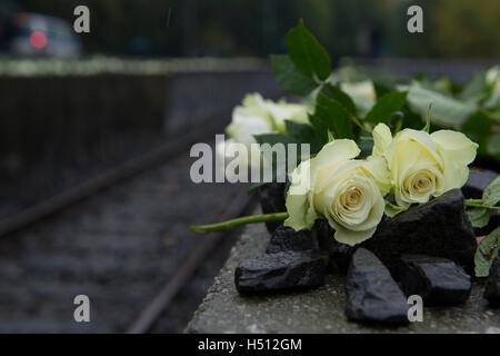 Berlin, Germany. 15th Oct, 2015. FILE - A file picture dated 15 October 2015 shows white roses seen next to the - Stock Photo