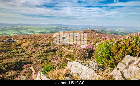 Blooming Heather Flowers Hills in Stiperstones UK - Stock Photo