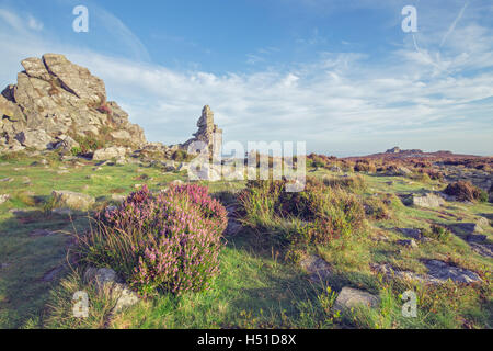 Seasonal Heather Flowers on the Top of Scenic Hill - Stock Photo