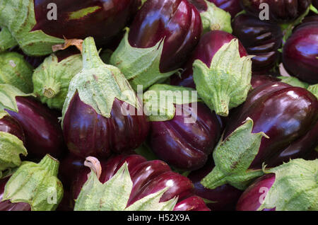 A pile of selected fresh eggplants for sale in a market - Stock Photo