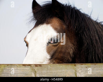 Close up of horse - Stock Photo