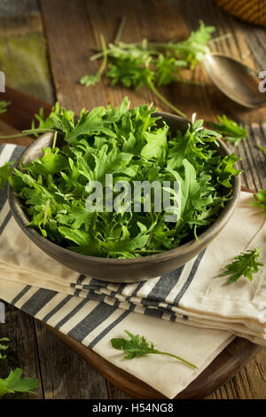 Raw Green Organic Baby Kale in a Bowl - Stock Photo