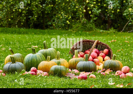 Freshly harvested pumpkins and apples in autumn garden - Stock Photo