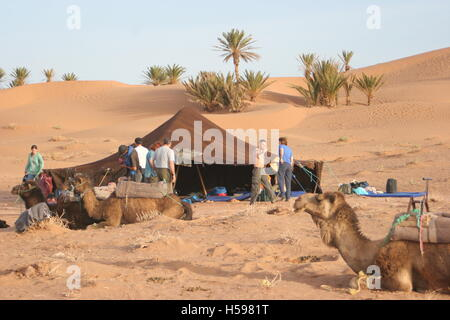 Tourists at a desert camp during a camel trek in the Sahara Desert near Zagora in Southerm Morocco. Shown camels - Stock Photo