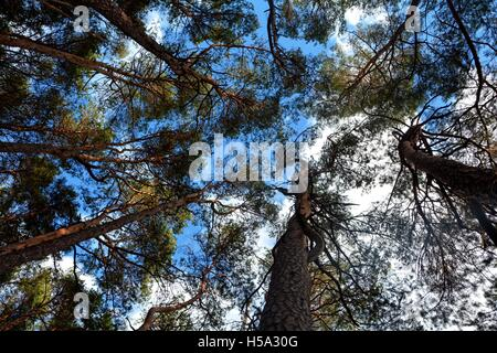 sky and tops of the trees - Stock Photo