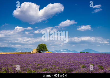 Summer in Valensole with lavender fields, stone house and heart-shaped cloud. Alpes de Hautes Provence, South of France