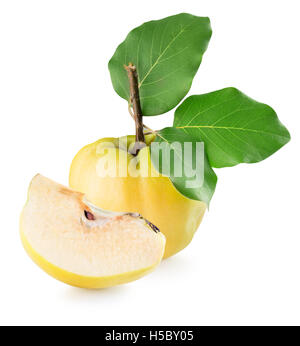 quinces isolated on the white background. - Stock Photo