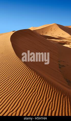 Sahara parabolic sand dunes of erg Chebbi, Merzouga Morocco, Africa - Stock Photo