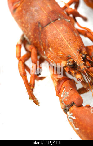 Whole lobster on fish stall / Fresh seafood - Stock Photo