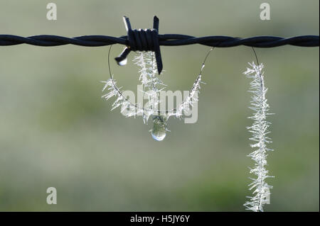 Horse-hair on barbed wire fence - Stock Photo