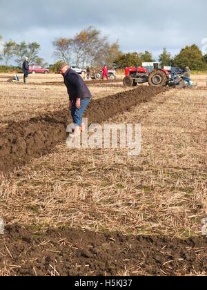 Farmer inspecting furrows at Ashover Ploughing Match, held at Highoredish Farm, Derbyshire. - Stock Photo
