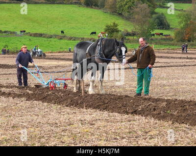 Ploughing the old-fashioned way with horse drawn plough at Ashover Ploughing Match, Highoredish Farm, Derbyshire. - Stock Photo
