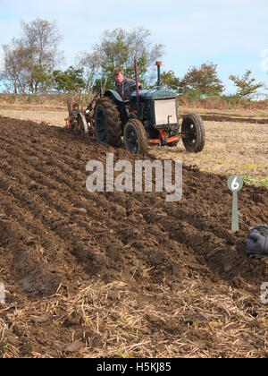 Farmer inspects his ploughing at Ashover Ploughing Match, Highoredish Farm, Derbyshire. - Stock Photo