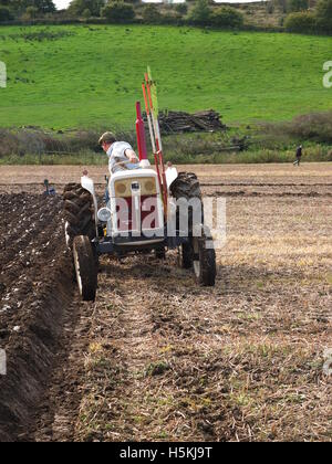 Farmer inspecting furrows as he ploughs at Ashover Ploughing Match, held at Highoredish Farm, Derbyshire - Stock Photo