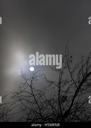 The sun shines through the mist behind a tree branch in oxford - Stock Photo